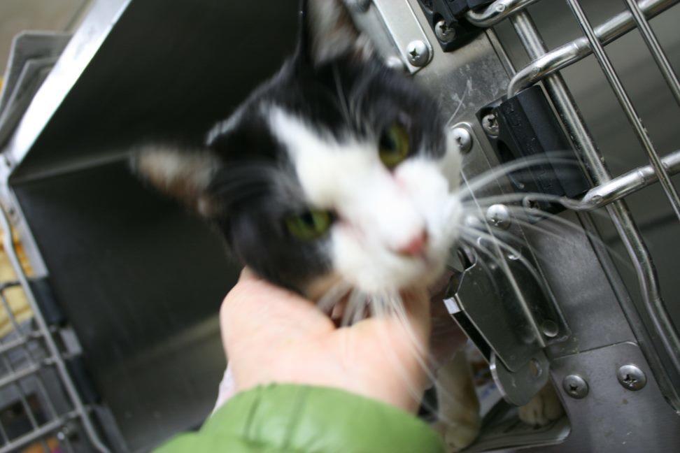 【移動先募集】センター(本所)収容猫(12/24訪問)_f0242002_17135723.jpg