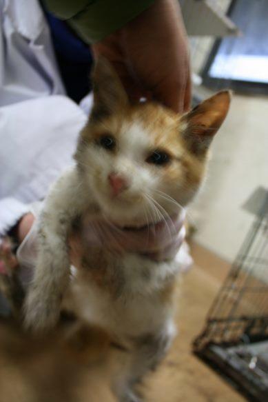 【移動先募集】センター(本所)収容猫(12/24訪問)_f0242002_17450536.jpg