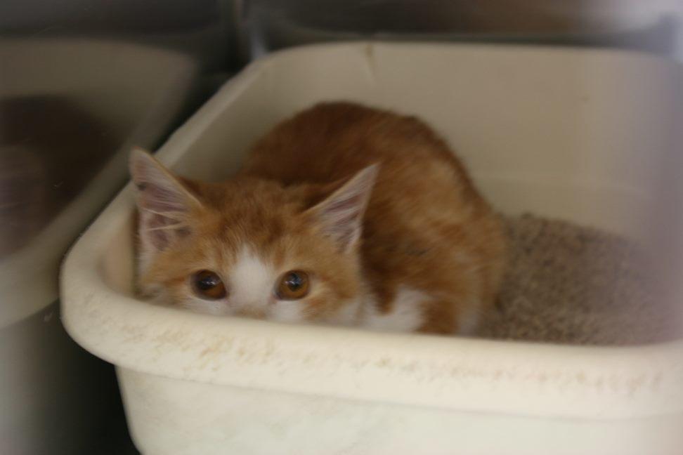 【移動先募集】センター(本所)収容猫(12/24訪問)_f0242002_18034821.jpg