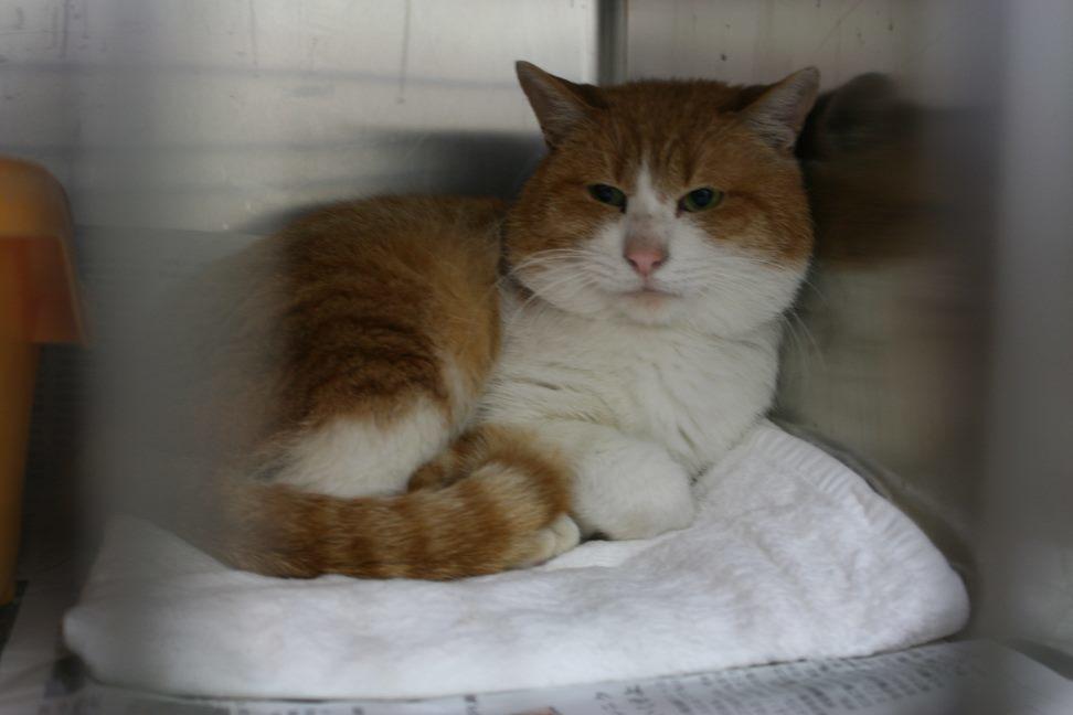 【移動先募集】センター(本所)収容猫(12/24訪問)_f0242002_18042550.jpg