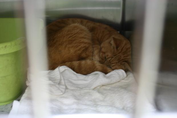 【移動先募集】センター(本所)収容猫(12/24訪問)_f0242002_20013559.jpg