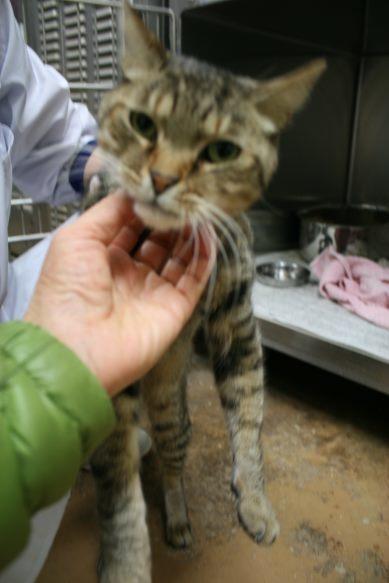 【移動先募集】センター(本所)収容猫(12/24訪問)_f0242002_20014600.jpg