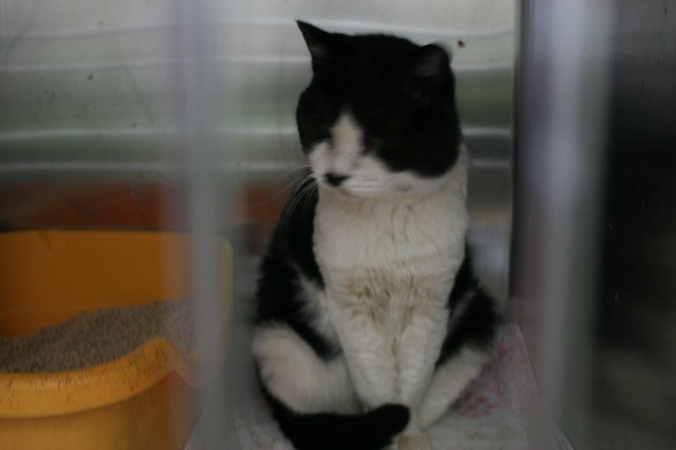 【移動先募集】センター(本所)収容猫(12/24訪問)_f0242002_20020044.jpg