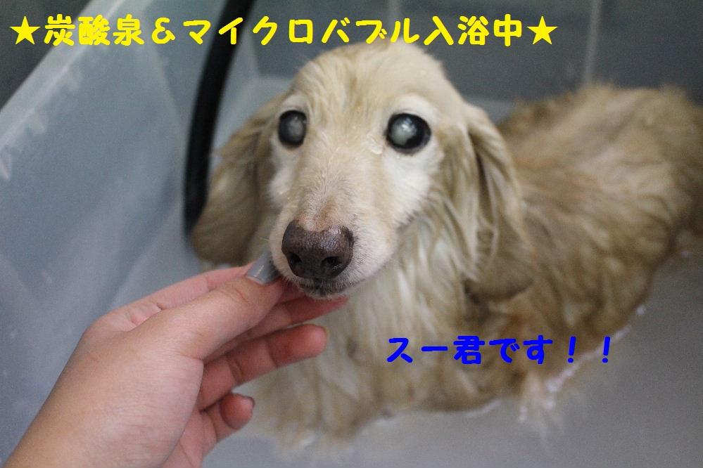 b0130018_048041.jpg