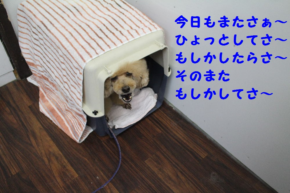 b0130018_6433137.jpg