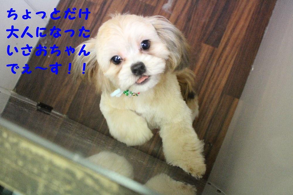 b0130018_6482343.jpg