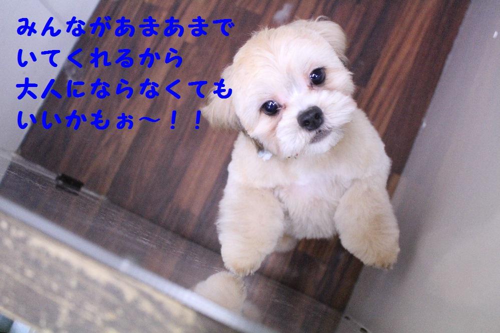 b0130018_6483590.jpg