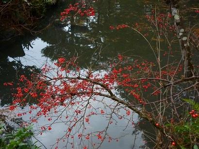 今日の清水園_e0135219_15154132.jpg