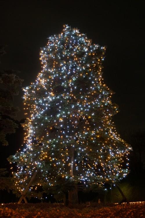 夜に芽吹く木々_f0055131_1220356.jpg