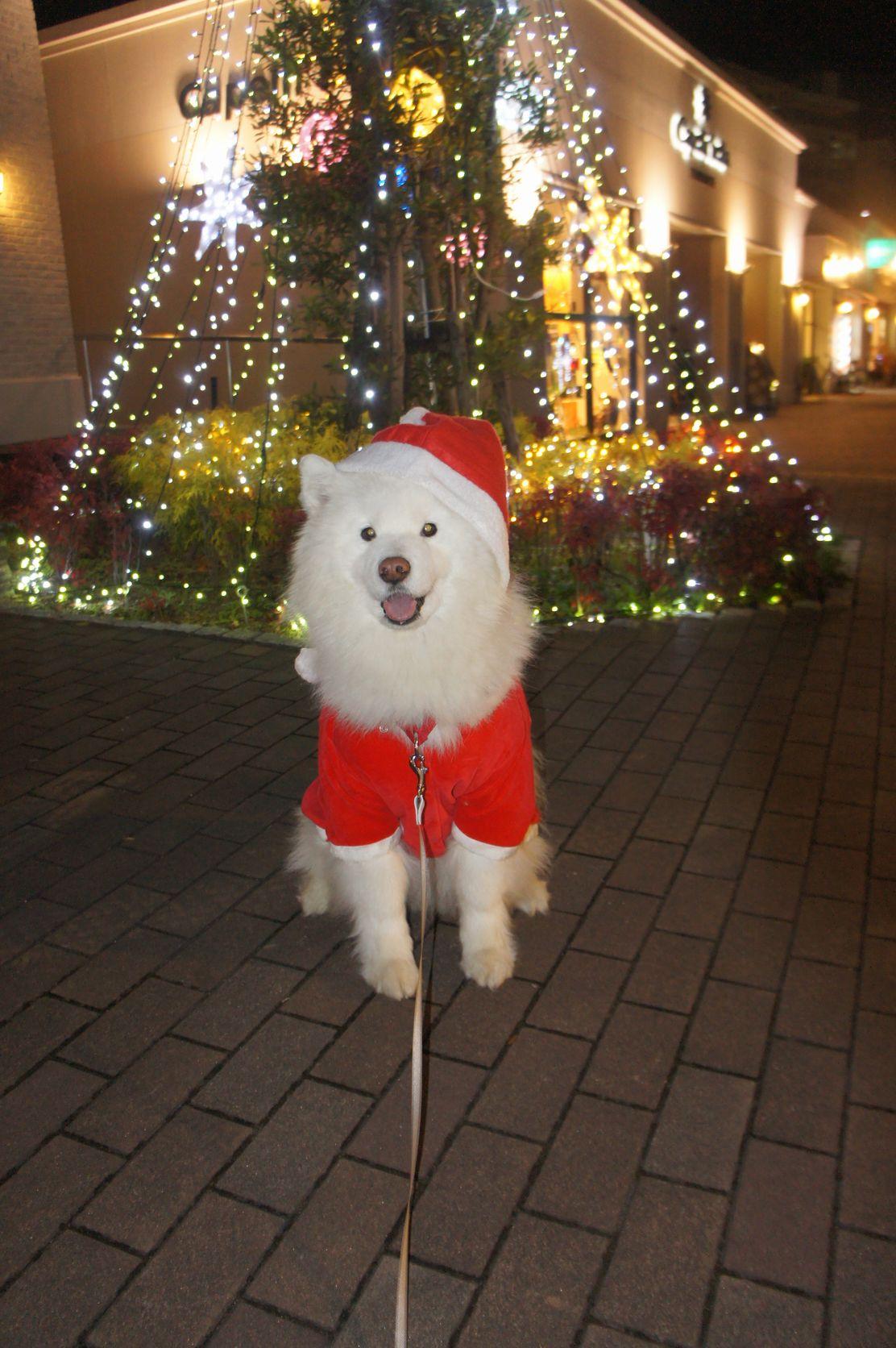 Merry Christmas_f0128542_0311666.jpg
