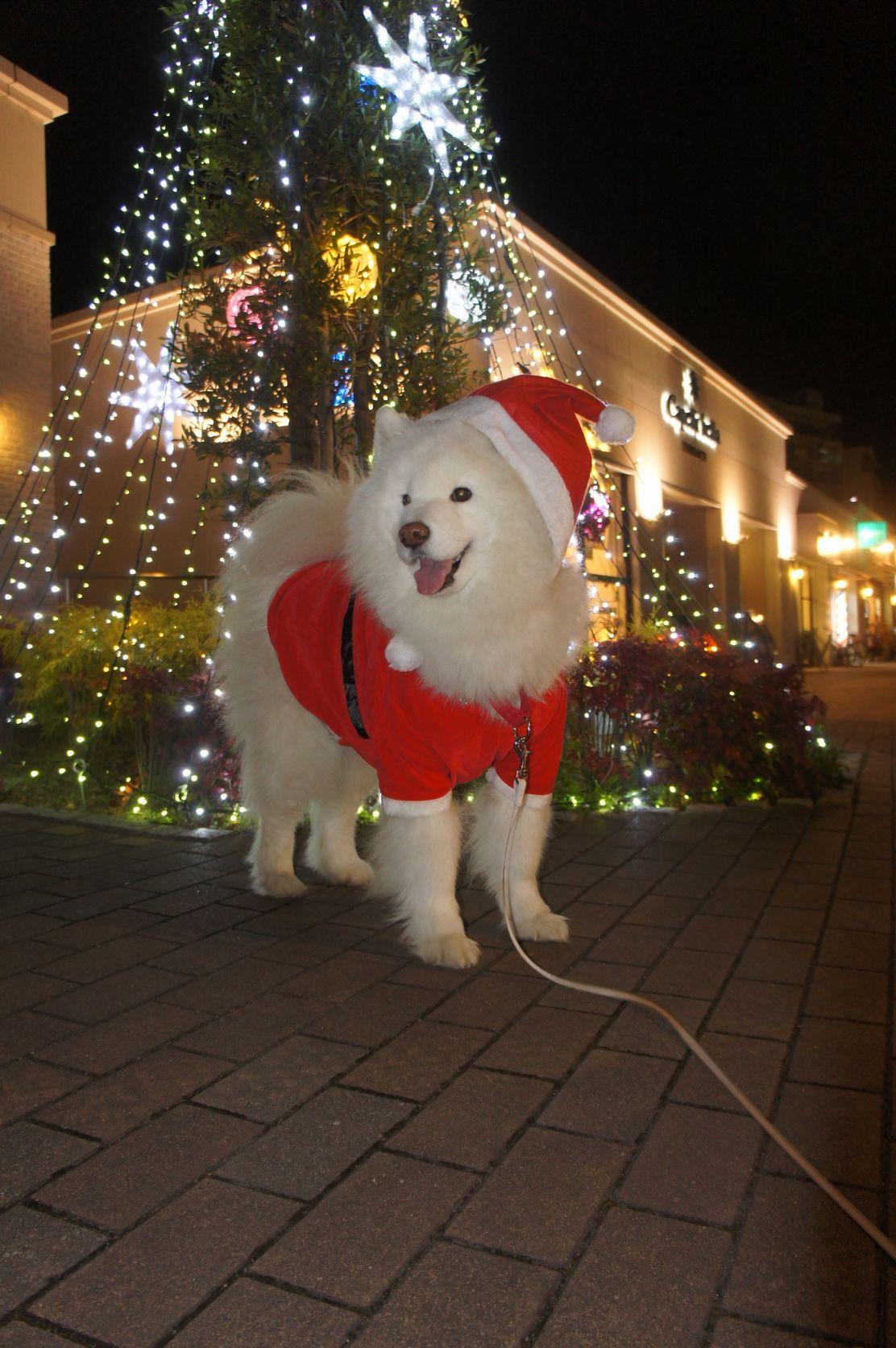 Merry Christmas_f0128542_032345.jpg
