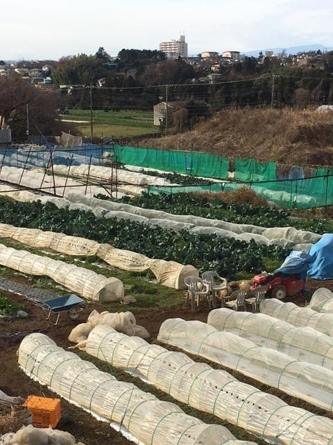 レタスの畝 1月 2月は暖冬?冷え込む?難しい予想です_c0222448_11310618.jpg