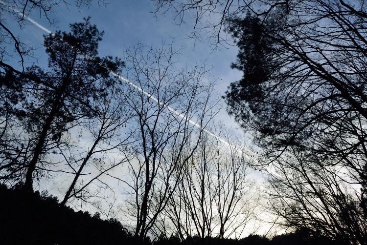 木を切る_d0231263_23555727.jpg