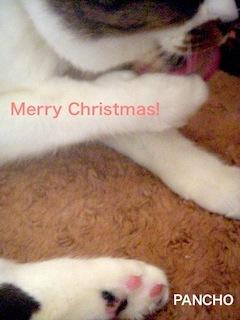 クリスマスパンチョ画像。_d0249667_10231498.jpg