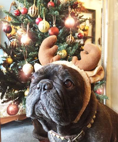 Merry Christmas!_f0155891_12162600.jpg