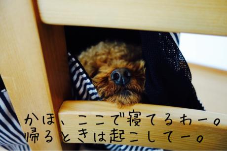 かほさんお友達大作戦_b0370192_10464048.jpg