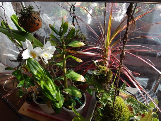 猫部屋の花たち、中々咲かないオキザリスなど~♪_a0136293_1857435.jpg