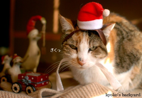 Sandyサンタさん、お疲れさま!(動物・ペット部門)_b0253205_02364035.jpg