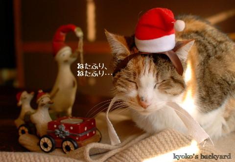 Sandyサンタさん、お疲れさま!(動物・ペット部門)_b0253205_02390841.jpg