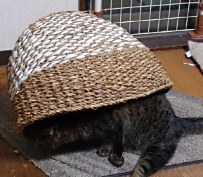 ウサちゃんがお気に召さなかったベッドが我が家へ(岡)_f0354314_00244009.png