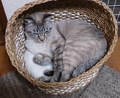 ウサちゃんがお気に召さなかったベッドが我が家へ(岡)_f0354314_00315467.png