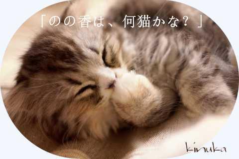 暮れの箸休め!_f0205317_08182482.jpg