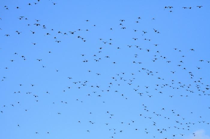 北潟湖の鳥達_c0155950_23572252.jpg