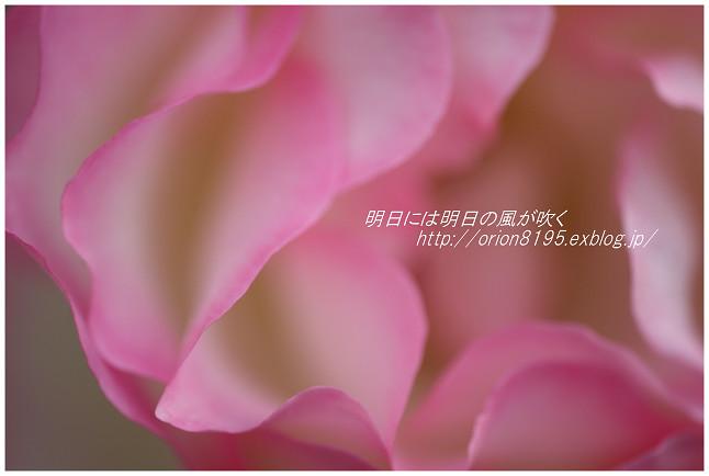 f0361079_1430965.jpg