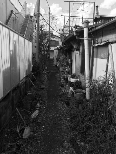 川崎 小向マーケット、亀甲マーケット_a0163788_21123122.jpg