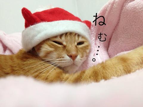 我が家の人気者 その110 クリスマス・イブの日に_e0021092_11062023.jpg