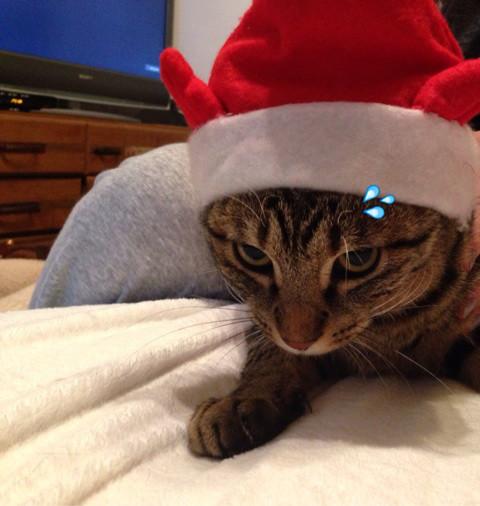 我が家の人気者 その110 クリスマス・イブの日に_e0021092_11081838.jpg