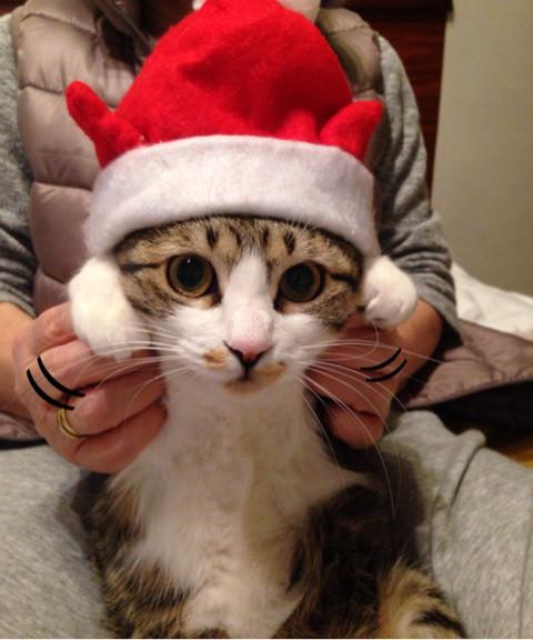我が家の人気者 その110 クリスマス・イブの日に_e0021092_11093209.jpg