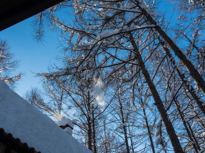 カラマツの枝に積もった雪を落としながら・・エゾリス君がやって来る!_f0276498_22260363.jpg