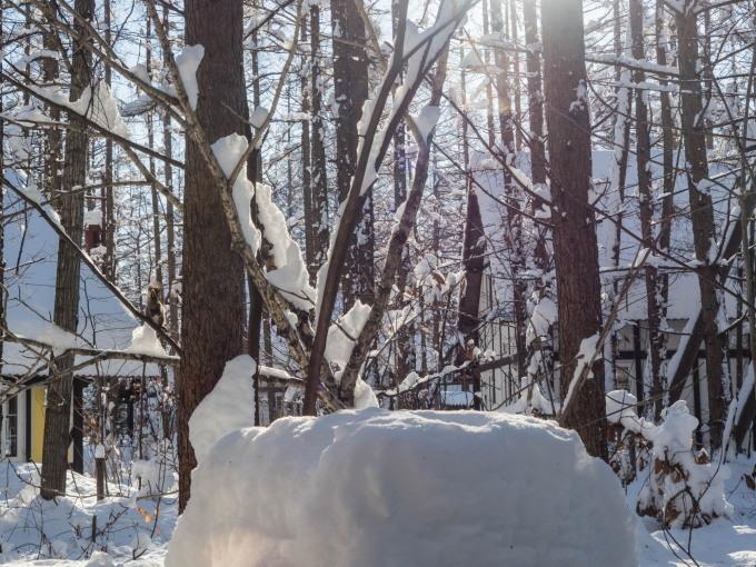 カラマツの枝に積もった雪を落としながら・・エゾリス君がやって来る!_f0276498_22263242.jpg