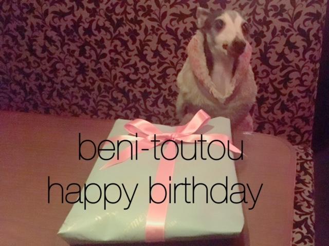ベニ・トトゥのお誕生日とクリスマス。_a0050302_313986.jpg
