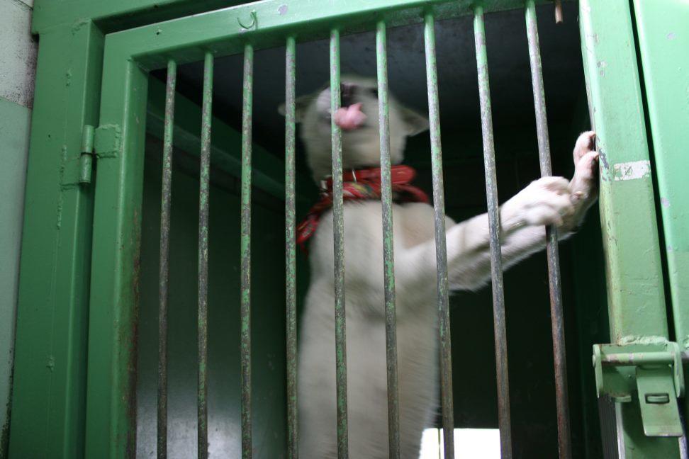 【移動先募集】センター(支所)収容犬(12/25訪問)_f0242002_00524597.jpg