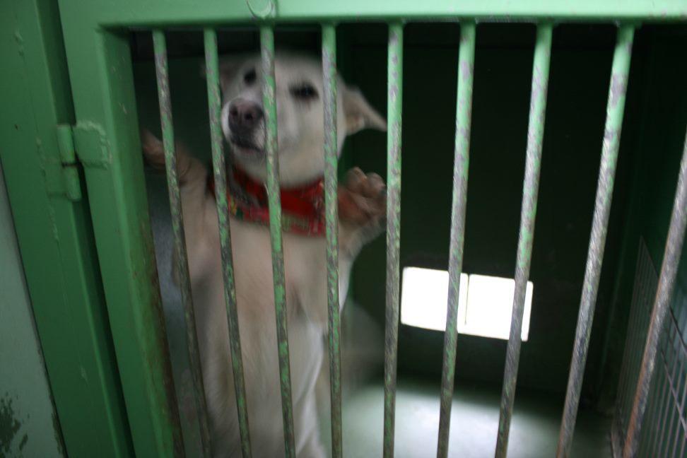 【移動先募集】センター(支所)収容犬(12/25訪問)_f0242002_00524941.jpg