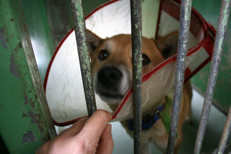【移動先募集】センター(支所)収容犬(12/25訪問)_f0242002_00525588.jpg