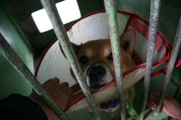 【移動先募集】センター(支所)収容犬(12/25訪問)_f0242002_00530112.jpg