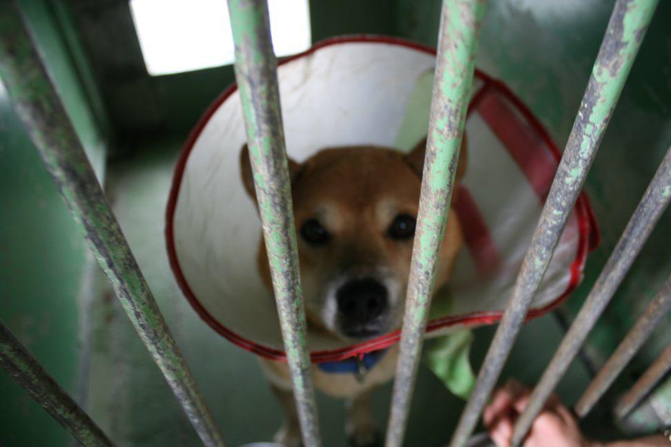 【移動先募集】センター(支所)収容犬(12/25訪問)_f0242002_00531225.jpg