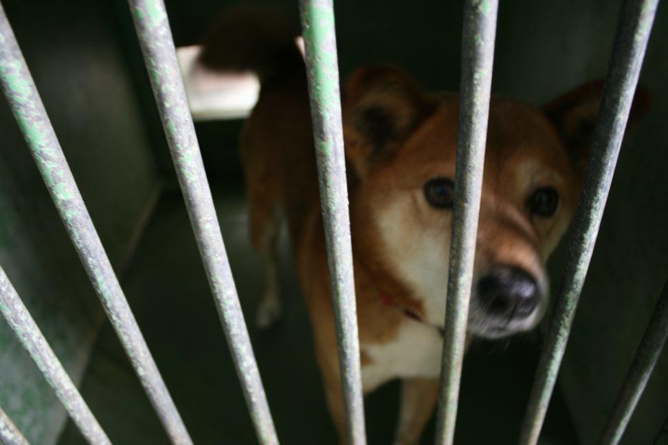 【移動先募集】センター(支所)収容犬(12/25訪問)_f0242002_00542502.jpg
