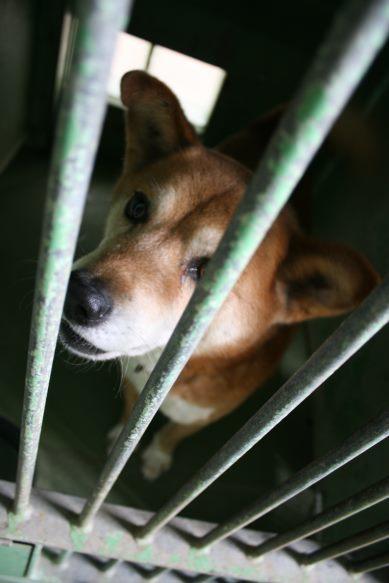 【移動先募集】センター(支所)収容犬(12/25訪問)_f0242002_00543814.jpg