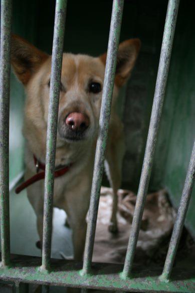 【移動先募集】センター(支所)収容犬(12/25訪問)_f0242002_00544592.jpg