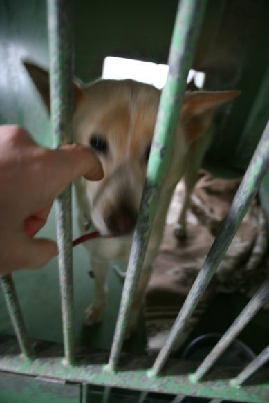 【移動先募集】センター(支所)収容犬(12/25訪問)_f0242002_00545284.jpg