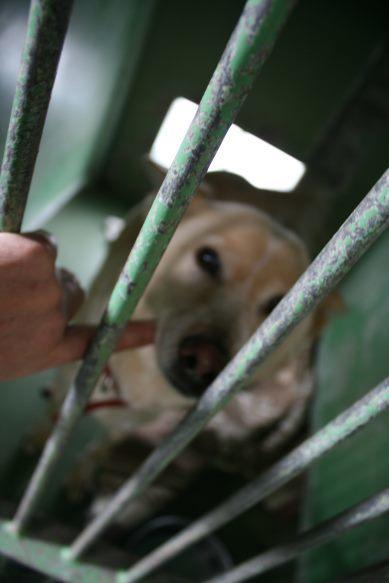 【移動先募集】センター(支所)収容犬(12/25訪問)_f0242002_00550555.jpg