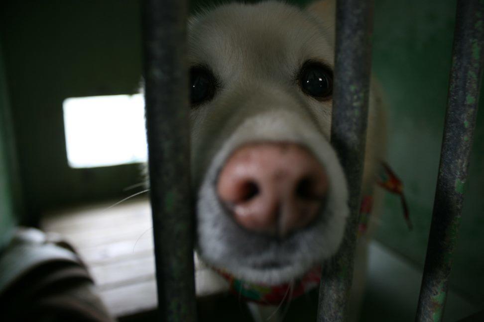 【移動先募集】センター(支所)収容犬(12/25訪問)_f0242002_00582283.jpg