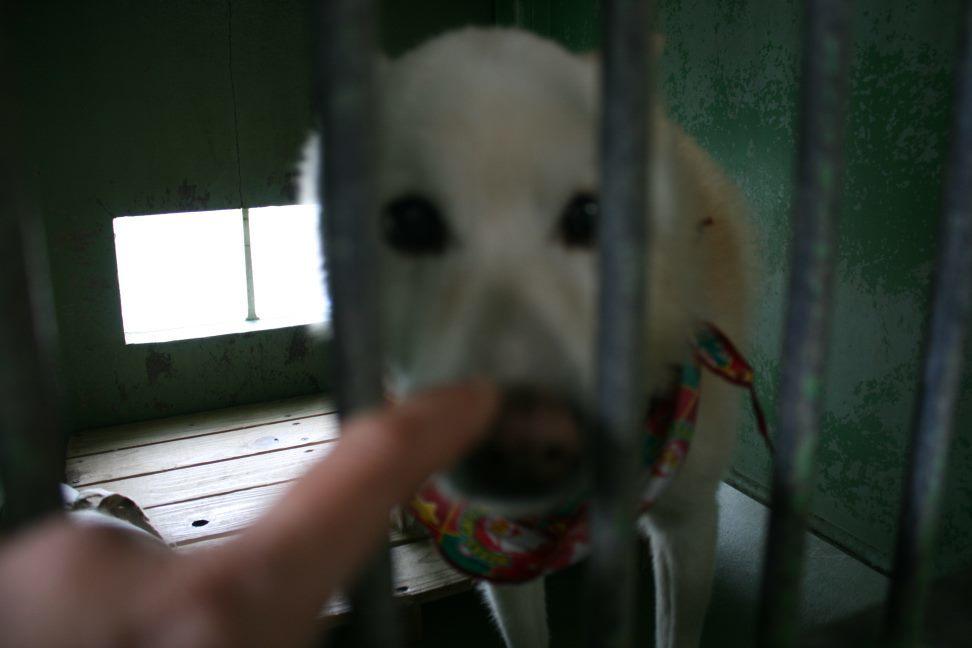 【移動先募集】センター(支所)収容犬(12/25訪問)_f0242002_00583497.jpg