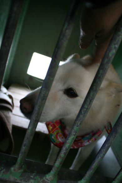 【移動先募集】センター(支所)収容犬(12/25訪問)_f0242002_00584596.jpg