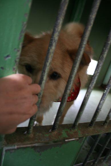 【移動先募集】センター(支所)収容犬(12/25訪問)_f0242002_00585433.jpg