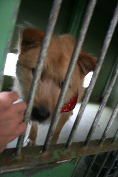 【移動先募集】センター(支所)収容犬(12/25訪問)_f0242002_00590124.jpg